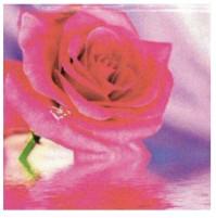 Diamond Painting rosa grande 20x20 cm