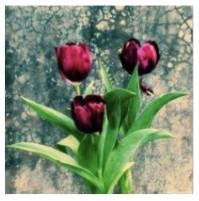 Diamond Painting 3 tulipani 20x20 con telaio